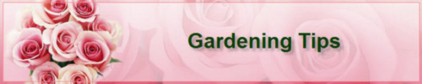 Thumbnail 51 Vegetable Gardening Tips